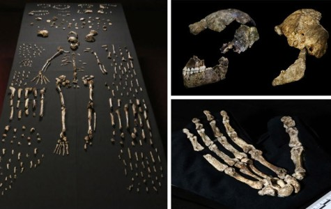 New human ancestor found